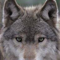 cwolfe68