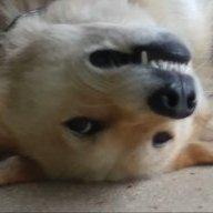 Moondog1